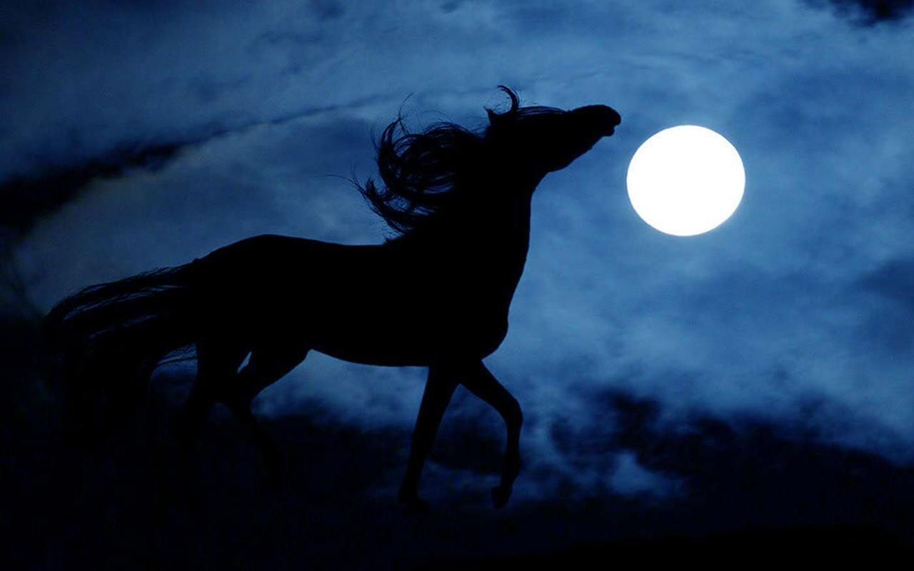 Horses Night Live Wallpaper For Android Apk Download