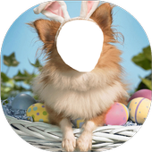 Funny Frames Photo Editor icon