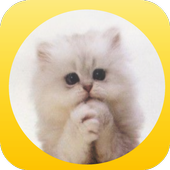 Please Cat - lol cat icon