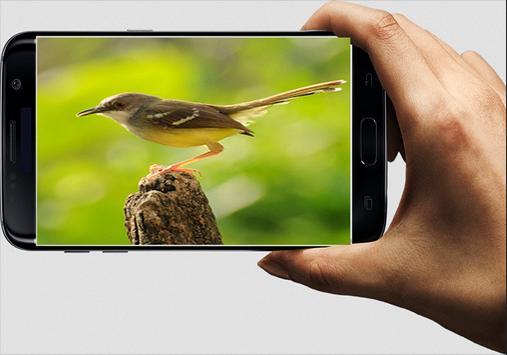 Suara Burung Ciblek screenshot 1