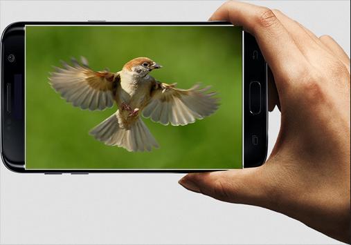 Suara Burung Gereja apk screenshot