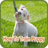 How To Train Puppy icon
