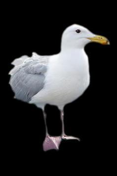 Seagull apk screenshot