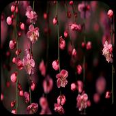 Sakura Blossom Live Wallpaper icon
