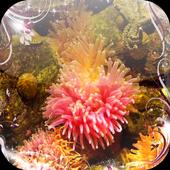 Sea anemone Jigsaw Puzzles icon