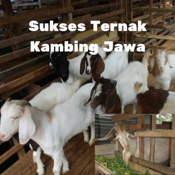 Kambing Jawa poster
