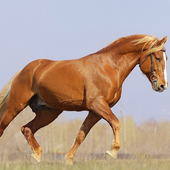 Best Horse Jigsaw Puzzles icon