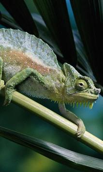 Chameleon Jigsaw Puzzles poster