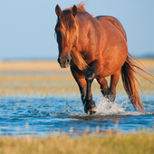Horse Jigsaw Puzzles icon