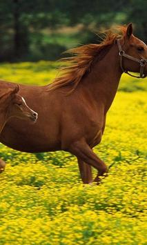 Horse Jigsaw Puzzles poster