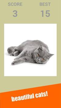 Snapcat : Snap Cat Games screenshot 1