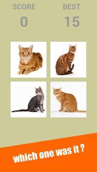 Snapcat : Snap Cat Games screenshot 6