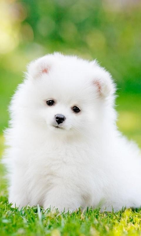 Cute Fluffy Puppy Live Hd