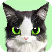 Warrior Cats Wallpaper For Android Apk Download