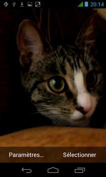 القط المتحرك apk screenshot