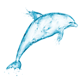 Widgets store: Dolphin icon