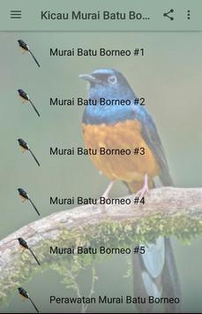 Kicau Murai Batu Borneo poster