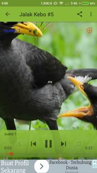 mp3 Burung Jalak Kebo screenshot 1