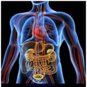 Human Anatomy Facts icon