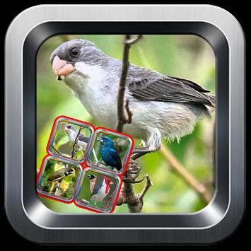 canto do pássaro preto screenshot 1