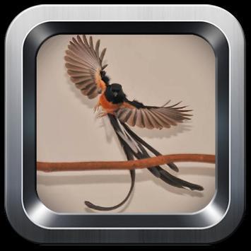 Chirping magpie terrain screenshot 3