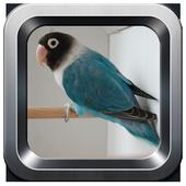kicau lovebird offline icon