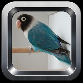 kicau lovebird offline screenshot 1