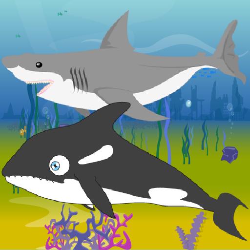 Killer Whale Shark Attack
