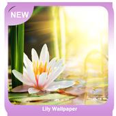 Lily Wallpaper icon