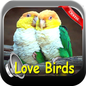 KICAU LOVE BIRDS 2017 icon