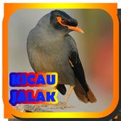 MASTER KICAU JALAK JAWARA icon