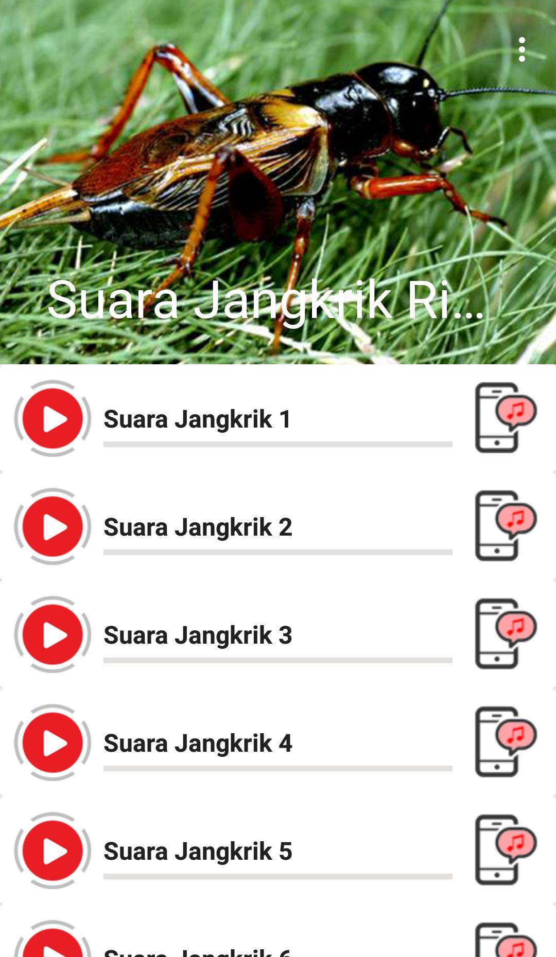 Suara Jangkrik For Android Apk Download