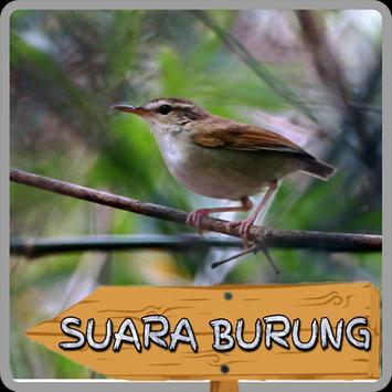 Kicau Buntut Tumpul screenshot 2