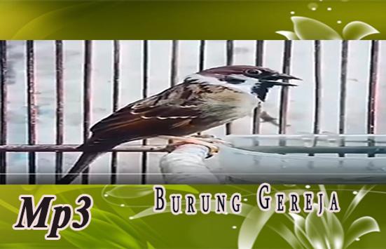 Suara Burung Gereja untuk Masteran kasar screenshot 2