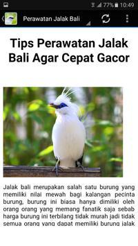 Kicau Master Jalak Bali Gacor screenshot 5