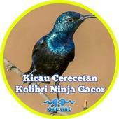 Cerecetan Kolibri Ninja Gacor icon