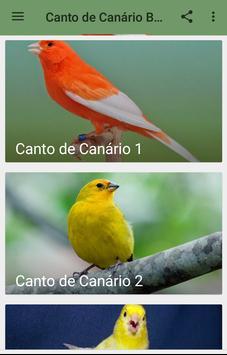 Canto de Canário Belga poster