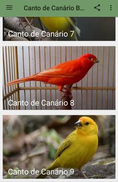 Canto de Canário Belga screenshot 7