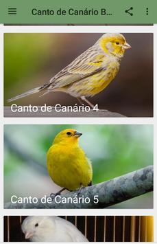 Canto de Canário Belga screenshot 6