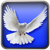 Kids Birds Simulator icon