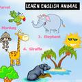 Speak english words animals