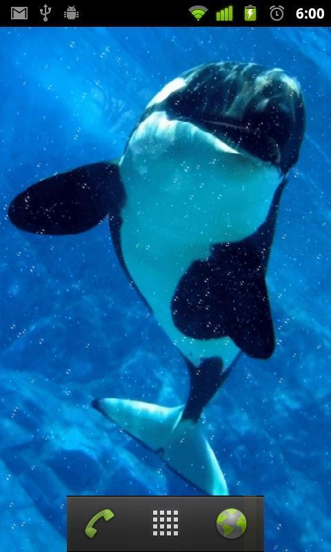 Killer Whale Wallpaper Poster Apk Screenshot