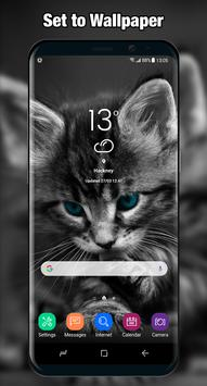 Cat Wallpaper & Background Full HD apk screenshot