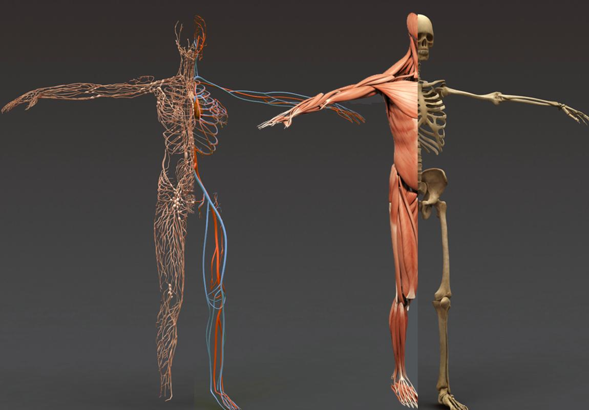 Human Anatomy 3D APK Download - Free Education APP for Android ...