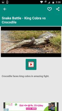 King Cobra Snake - Videos apk screenshot