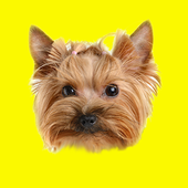 Domestic Animals Photo Sticker icon