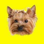 Domestic Animals Photo Sticker icon