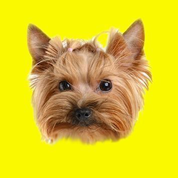Domestic Animals Photo Sticker poster