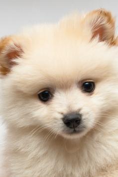 Cute Puppy Wallpapers screenshot 1