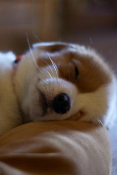 Cute Puppy Wallpapers screenshot 7